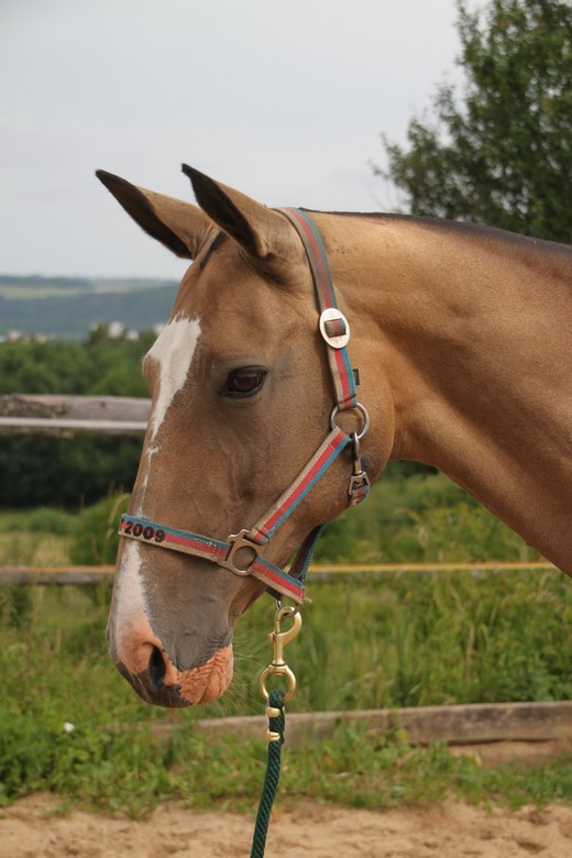 horse-04
