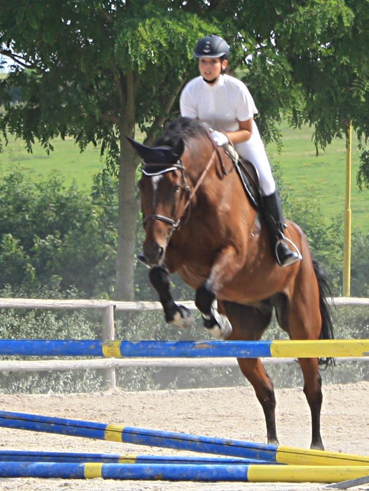 horse-05
