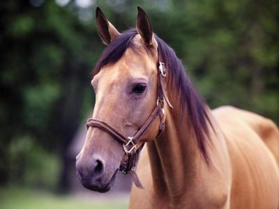 Spokojený kůň